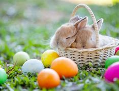 Easter Rabbit in an Easter basket with colored eggs