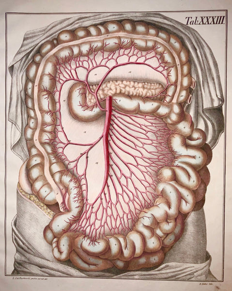 1827 Bierkowski Imperial Folio Masterpiece Anatomical Book Illustration Stomach