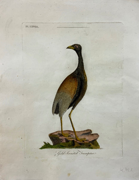 1793 John Latham - GOLD BREASTED TRUMPETER - Ornithology - hand coloured copper engraving