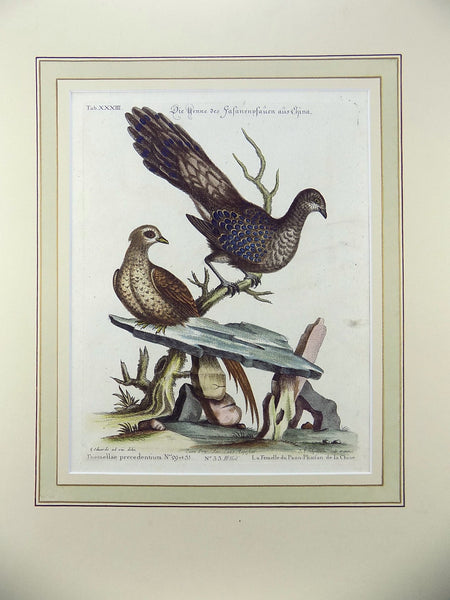 George Edwards (1694-1773) (after), Seligmann; Folio - CHINESE PEACOCK 1751 - Ornithology