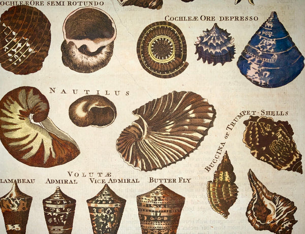 1785 Valois sculp. - Tall folio hand coloured - SHELLS Limpets Nautilus Buccina