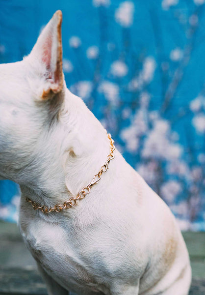 "Dog Collar ""The Pearl"""