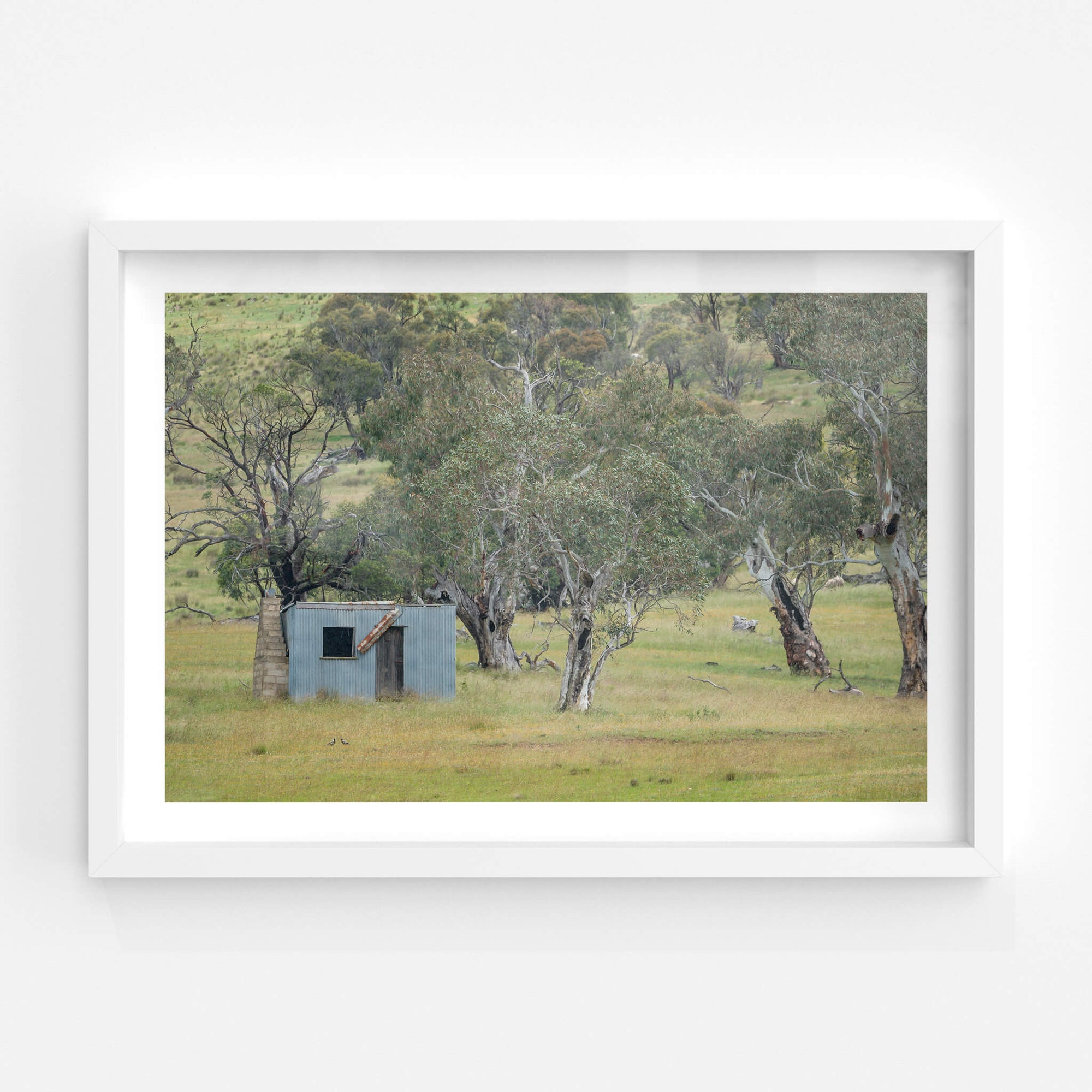 Home Amongst The Gums | A Place to Call Home