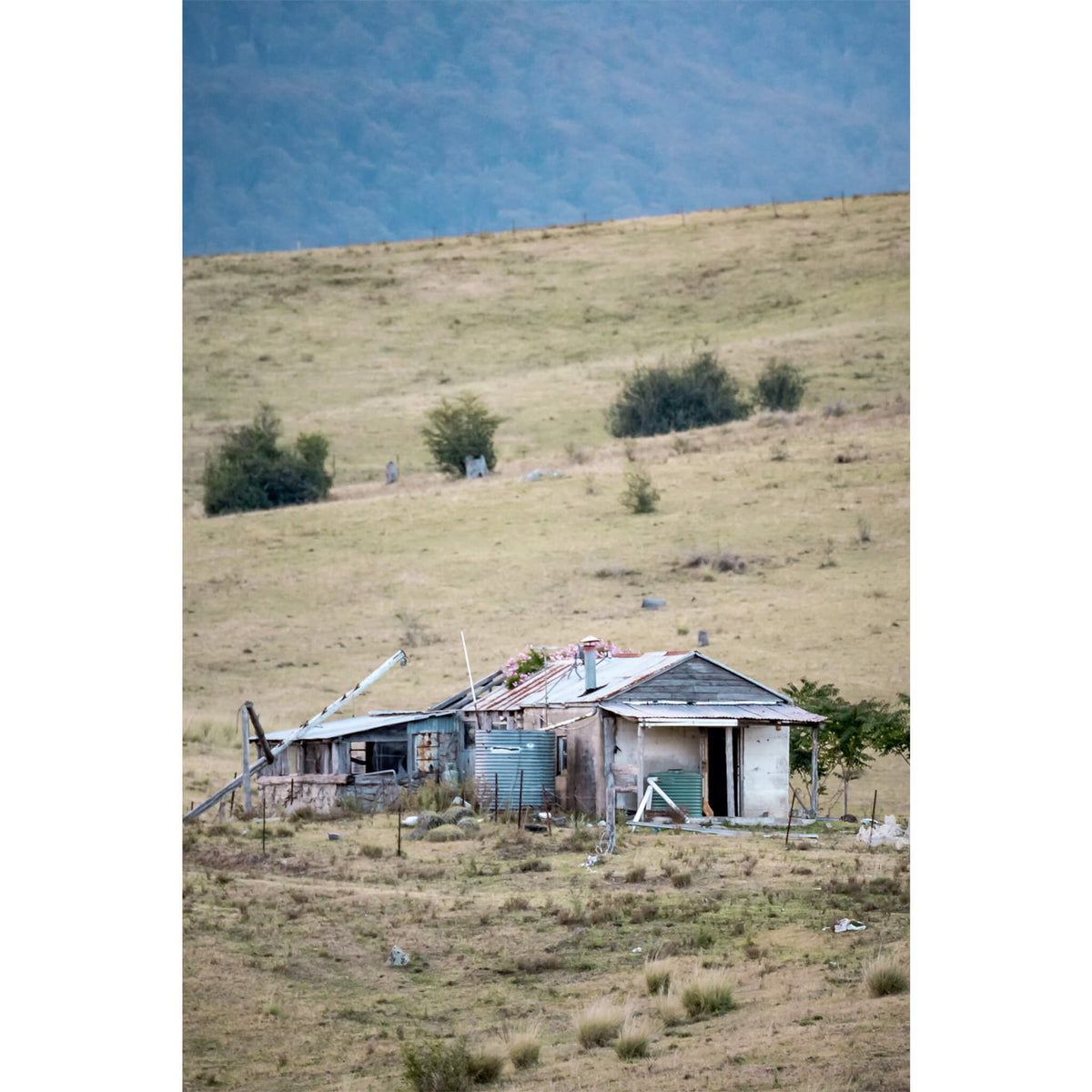 Mogilla Roadside | A Place to Call Home Fine Art Print - Lost Collective Shop
