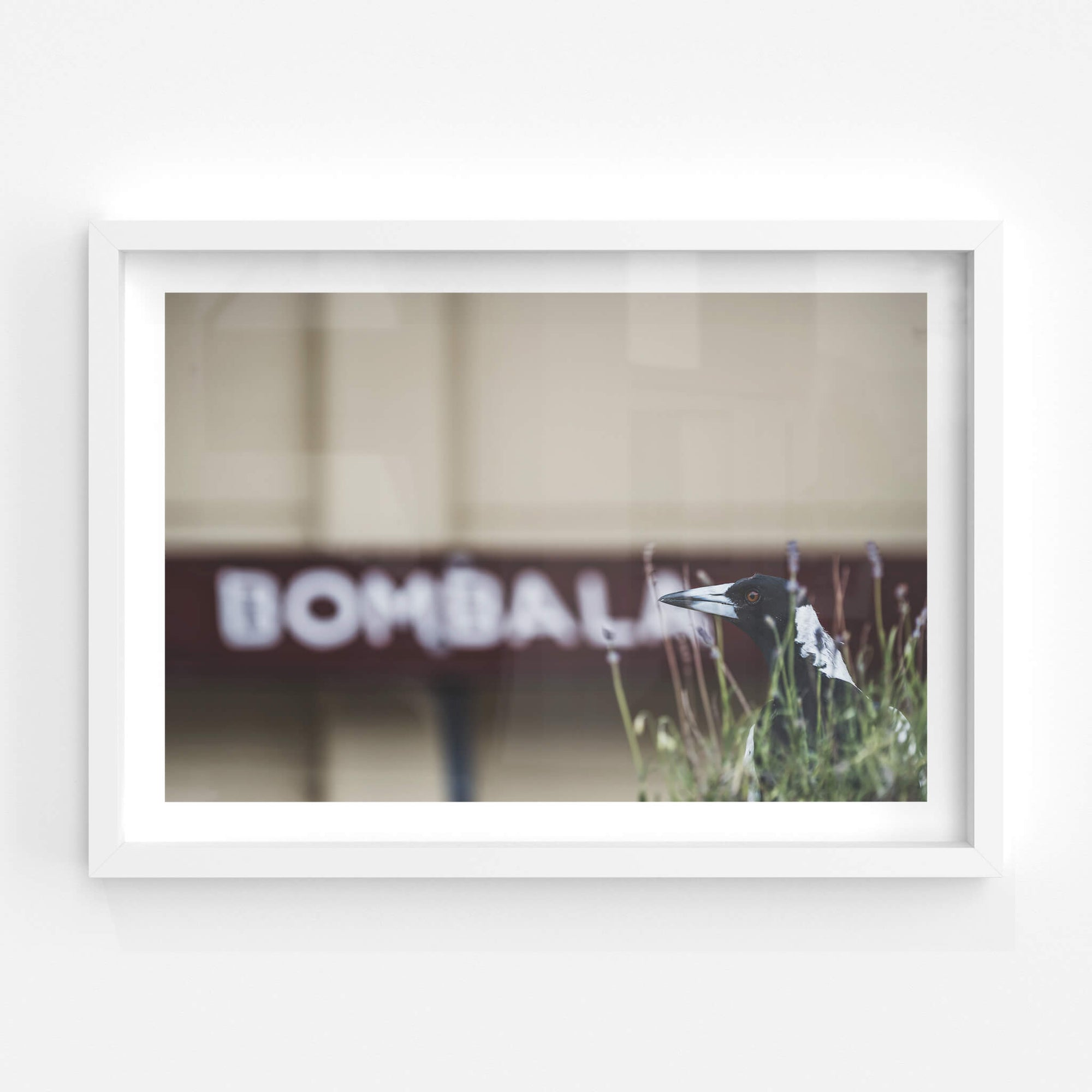 Volunteer | Bombala Station