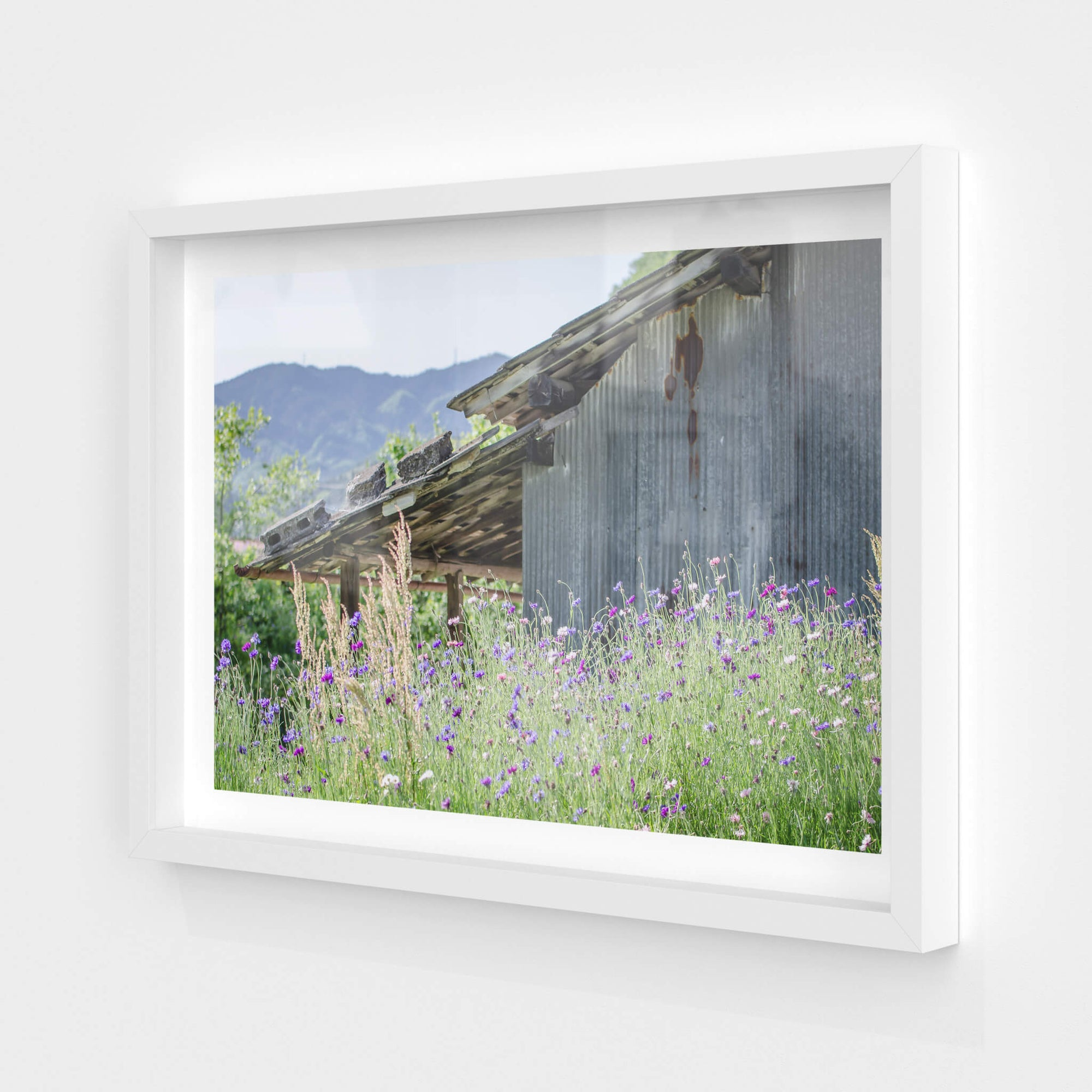 Annaka Farm Shed | Landscapes Fine Art Print - Lost Collective Shop