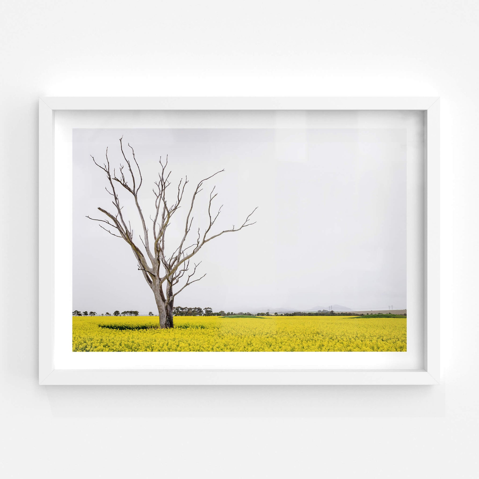 Canola Tree | Landscapes Fine Art Print - Lost Collective Shop