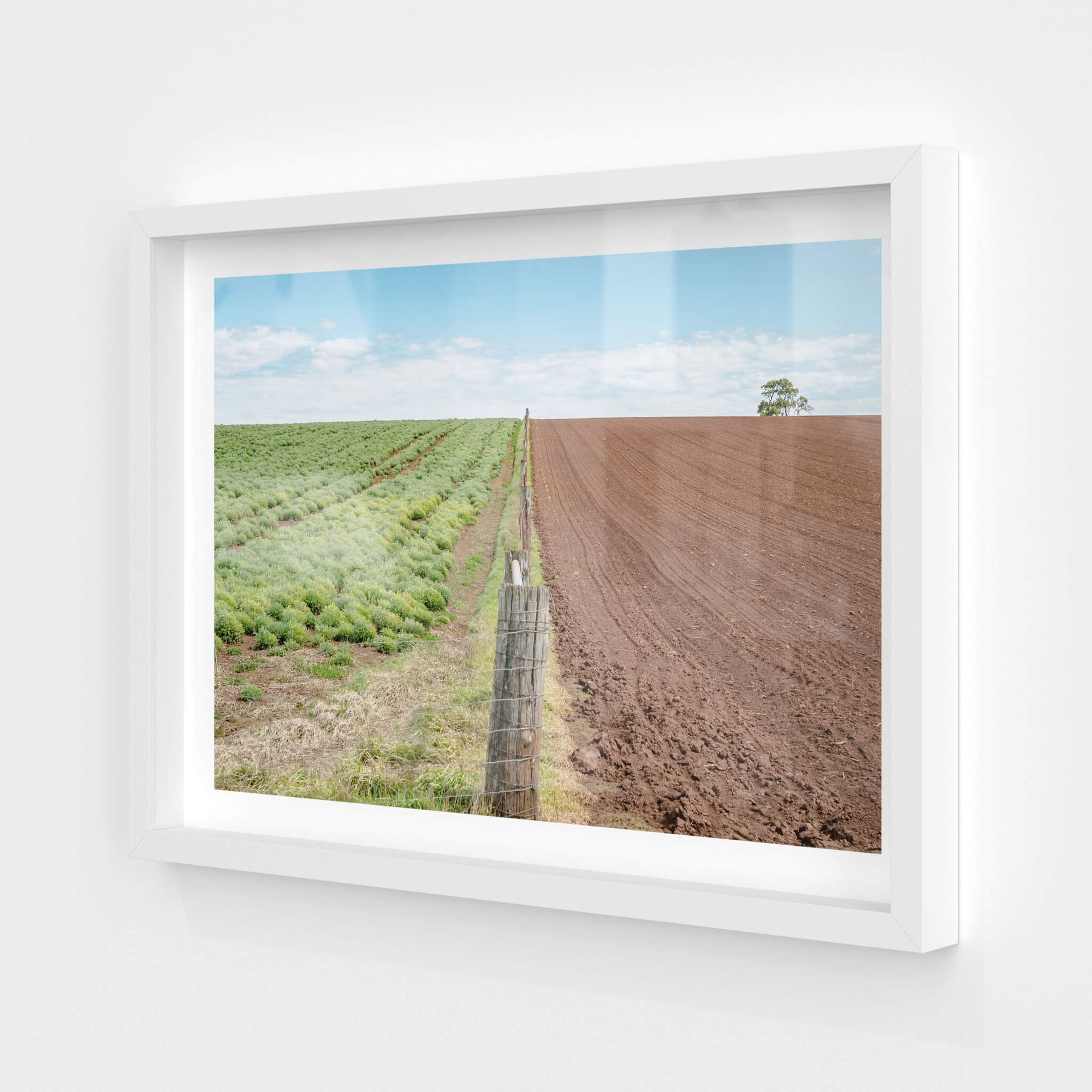 Fenceline | Landscapes Fine Art Print - Lost Collective Shop