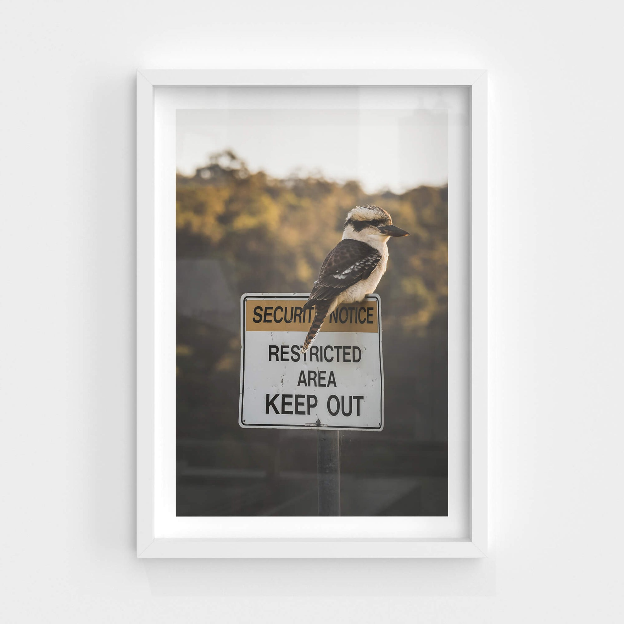 Kookaburra | Landscapes Fine Art Print - Lost Collective Shop