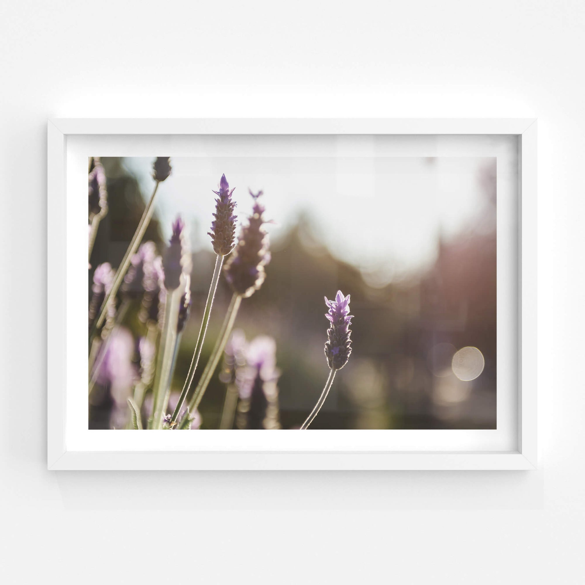 Lavender | Landscapes Fine Art Print - Lost Collective Shop