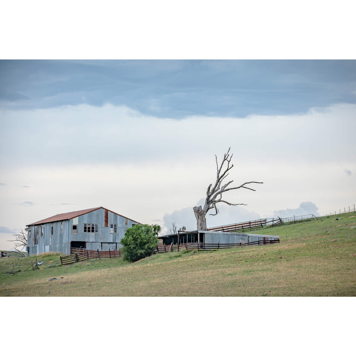 Jimenbuen Woolshed | The Woolshed Fine Art Print - Lost Collective Shop