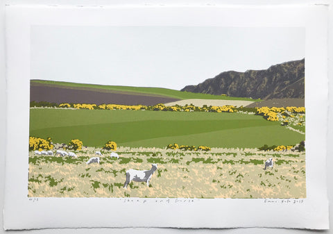 Sheep & Gorse