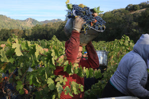The Natural Wine Revolution