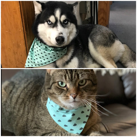 handsome dog and cat wearing bandana scarf