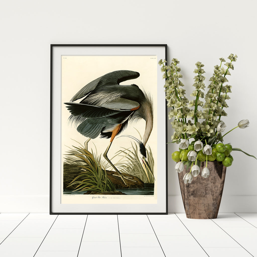 Audubon Remastered Prints