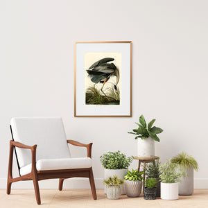 framed Audubon bird print