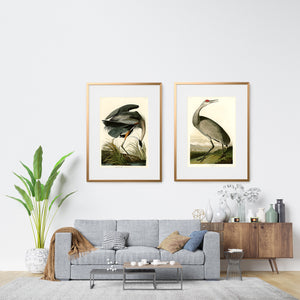 Pair of Audubon bird prints