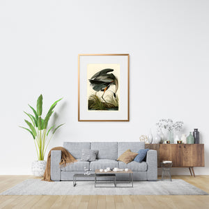 Great Blue Heron bird print