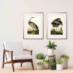 two framed Audubon bird prints