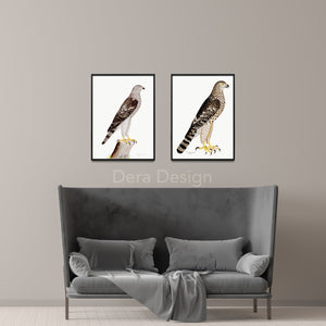 Rudbeck Goshawk & Honey Buzzard Plates 4 & 32
