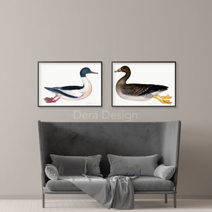 Olof Rudbeck Goosander Duck Swedish Bird Print