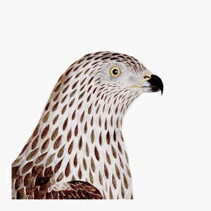 Rudbeck Honey Buzzard Plate 9 head closeup