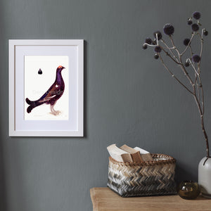 Black Grouse Cock giclée bird print mockup 25