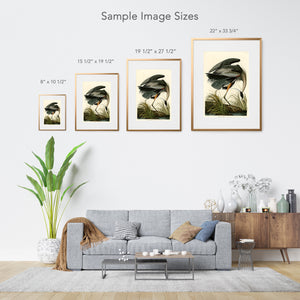 Audubon print sizes