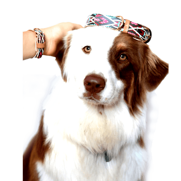 "The ""Boho"" Dog Collar - ArgusCollar"