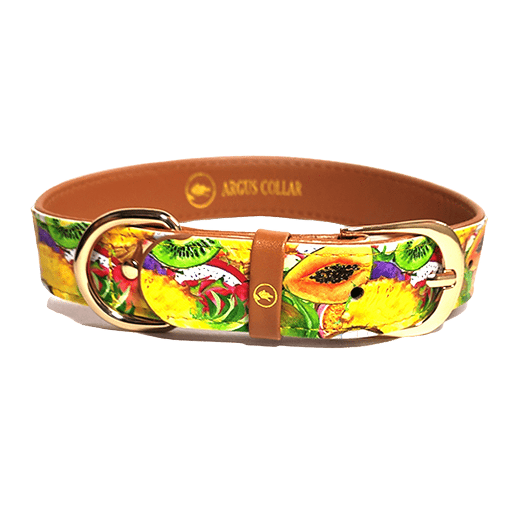"The single ""Tutti Frutti"" Collar - ArgusCollar"