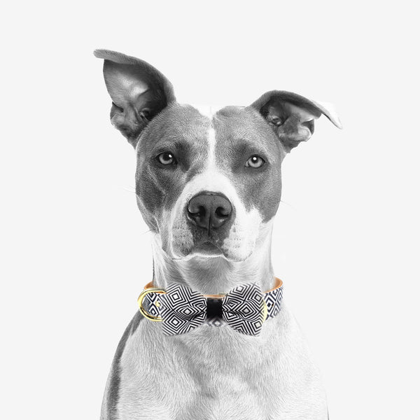 "The ""BW Squary"" Dog Bow Tie"