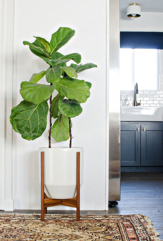 7 Decorating Tricks to Brighten a Dark Room ( BY HOUZZ) – Zen Better on house plants for stairs, house plants for bathrooms, house plants for hallways, plants for low light rooms, plants that like dark rooms, house plants for offices,