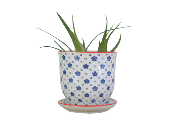 LIBERTE POT AND SAUCER BLUE STARS