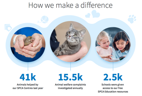 SPCA NZ Facts