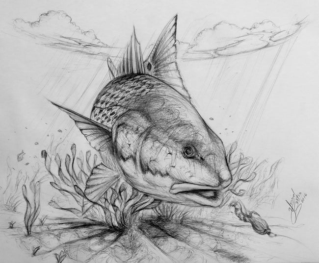 Original Drawing - Redfish on Fly
