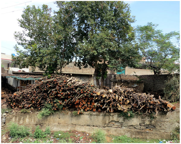 Pile of freshly cut trees outside Mingora, Photograph by Syed Abu Ahmad Akif (20 x 16 in)