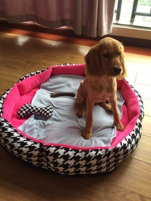 *BEST BUY* Agatha's First Bed