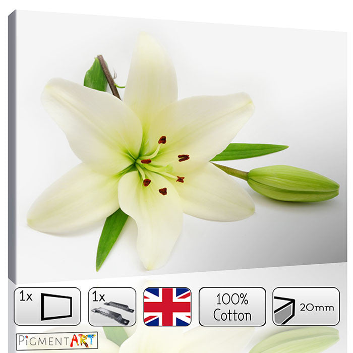 Lily Flower White Background Canvas - canvas wall art prints uk