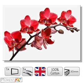 Red Flower Orchid White Background Canvas - canvas wall art prints uk