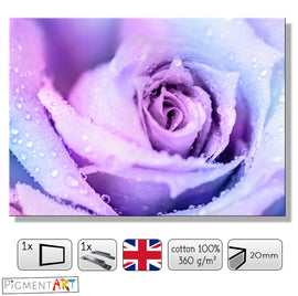 Lilac Rose With Drops Flowers Floral Canvas - canvas wall art prints uk