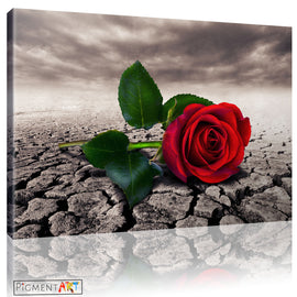 Red Rosr Flower Sepia Landsace Floral Canvas - canvas wall art prints uk