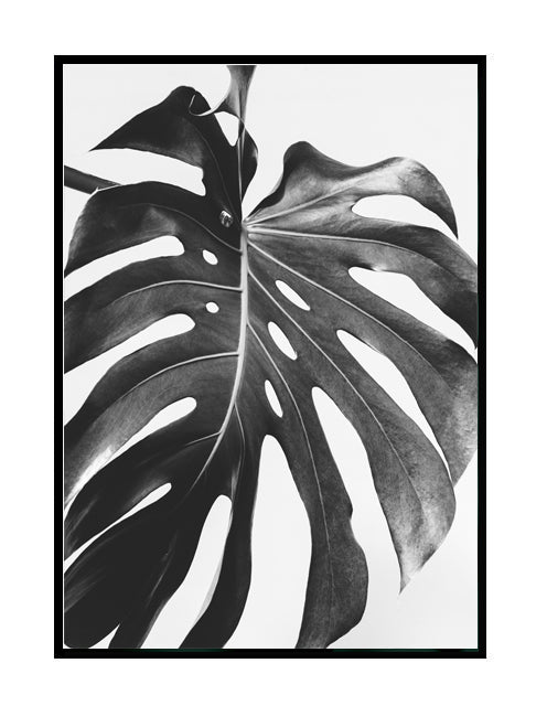BLACK AND WHITE MONSTERA PART 3