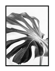 BLACK AND WHITE MONSTERA PART 2
