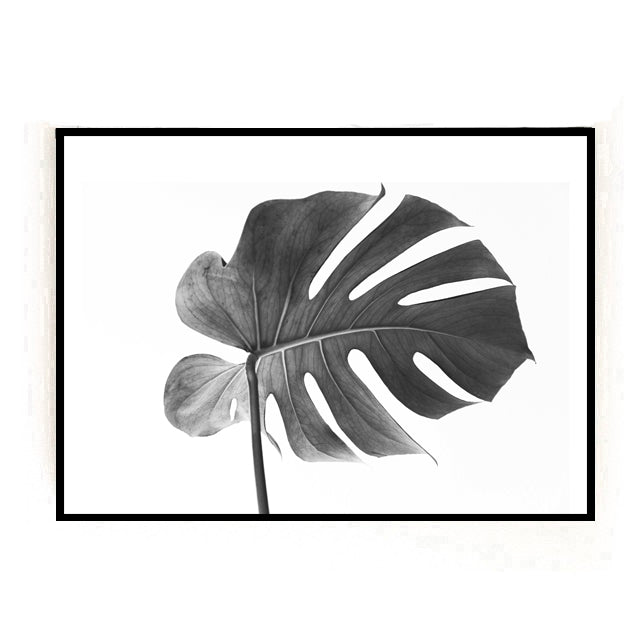Black and White Monstera