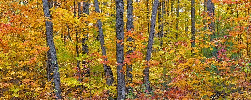 Michigan Fall Colors. I - Igor Menaker Fine Art Photography