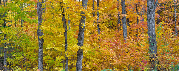 Michigan Fall Colors. II - Igor Menaker Fine Art Photography