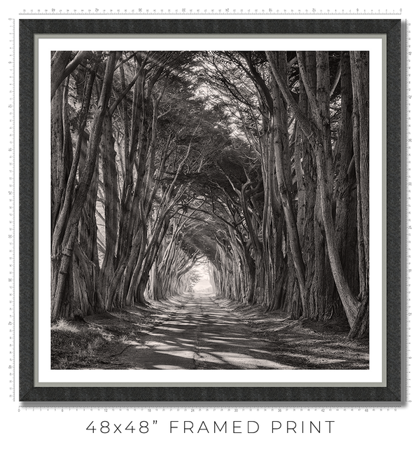 Cypress Tunnel - Igor Menaker Fine Art Photography