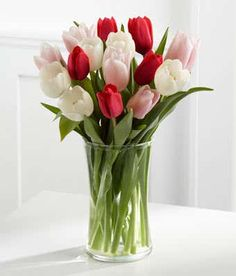 Sweetheart's Tulips