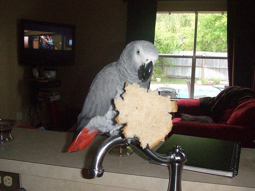 Making Your House Safe For Parrots