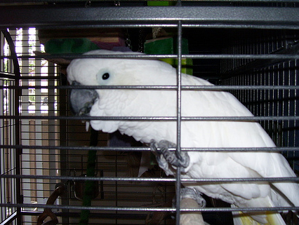 Re-homing a Parrot